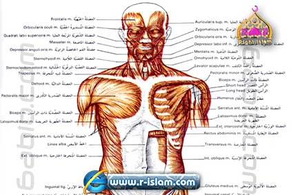 Si un Órgano del Cuerpo Humano Está Dañado, Todo el Cuerpo Sufre ...